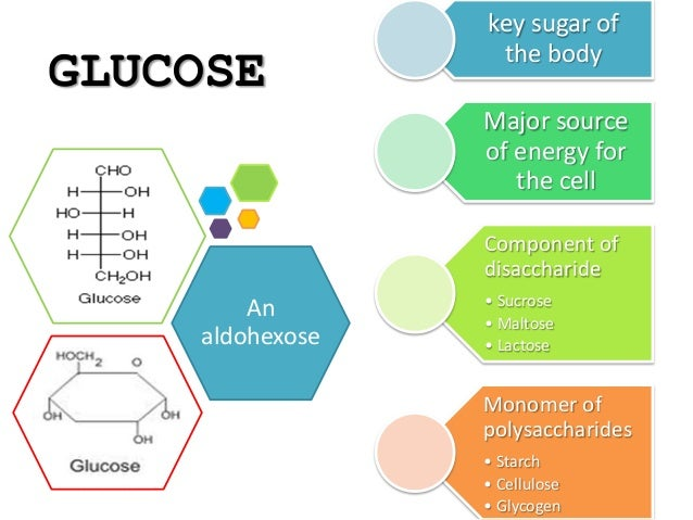 what are disaccharides and give an example