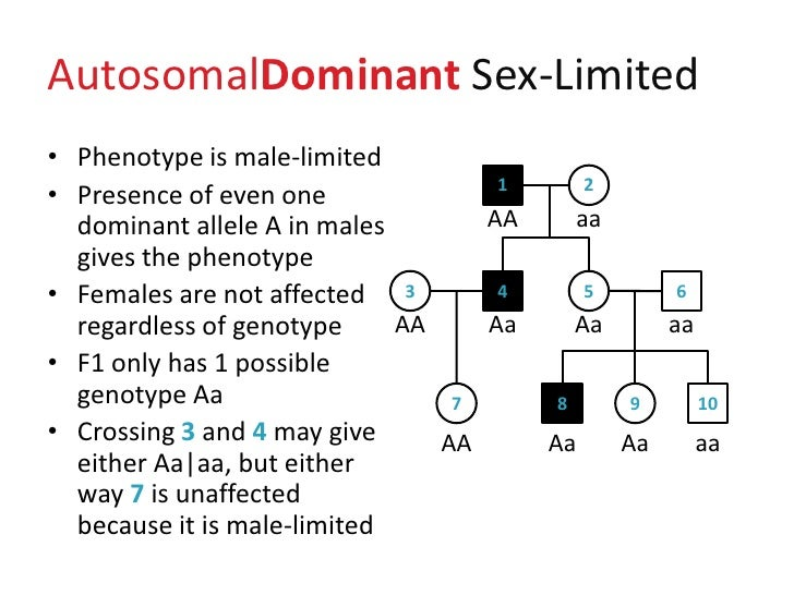 what is a phenotype and give an example