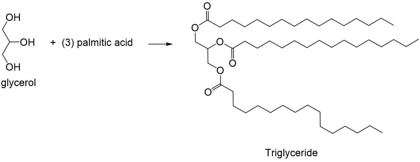 draw an example of a lipid